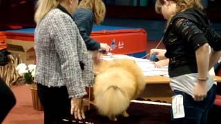 выставка собак лидер ит от 15.09.2013 ринг шпицев http://zoofortuna.rusff.ru/(http://zoofortuna.rusff.ru/ сайт клуба Фортуна., 2013-09-16T06:06:24.000Z)