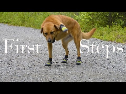 HILARIOUS! Dog Takes First Steps in Shoes