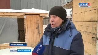 Новосибирские ветеринары спасли собаку, сбитую машиной