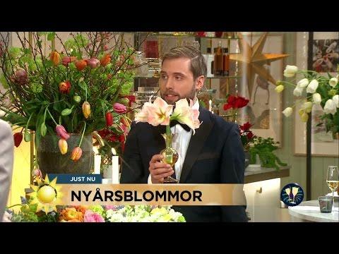 """Nyårsblommor """"Hellre en liten blomma än en ful stor bukett"""" - Nyhetsmorgon (TV4)"""