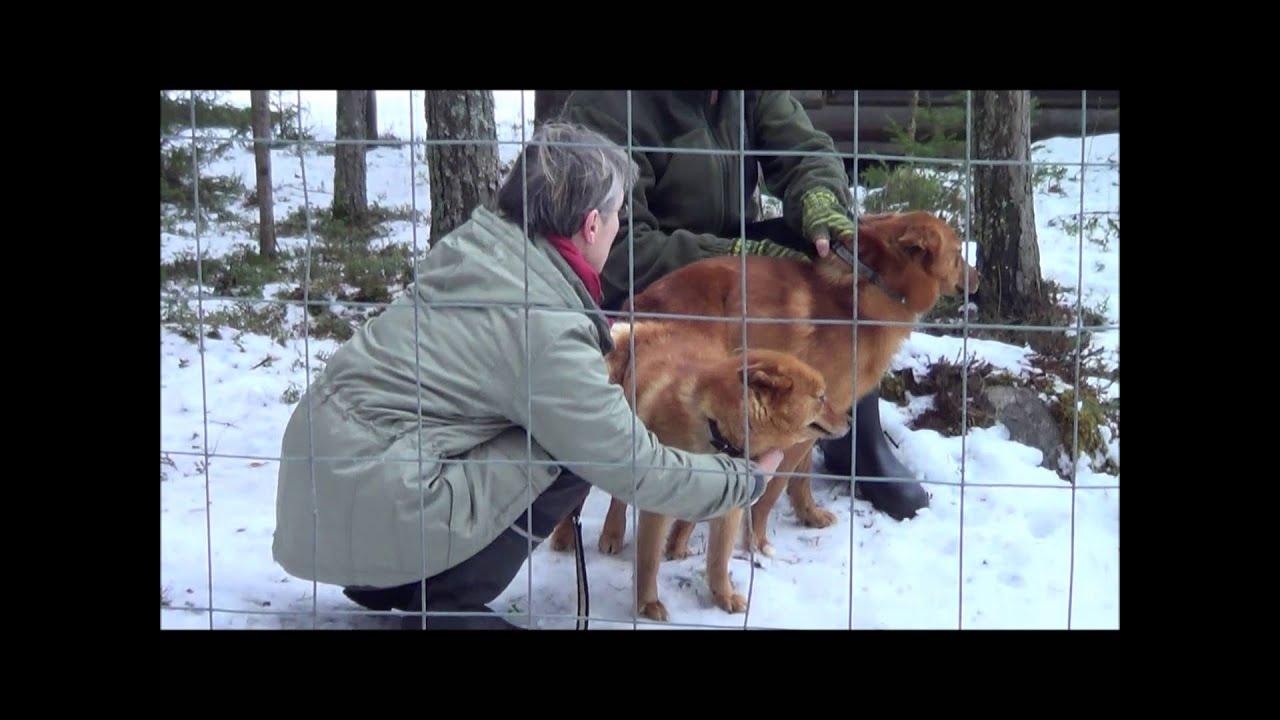 Koiran Astutus Tärppipäivät