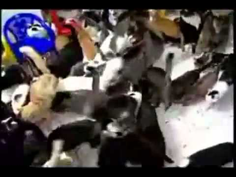 Incredible Amount Of Cats Living in One House