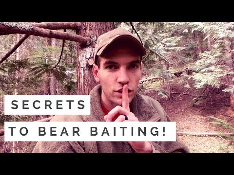 The PERFECT Bear Bait Setup- Attracting Black Bear