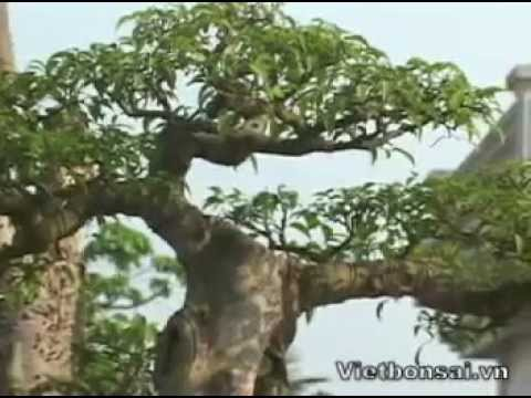 Triển lãm SVC Hạ Long Quảng Ninh 2012 - P3.2- Vietbonsai.vn