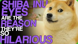 Shiba Inu Eyes Are The Reason They're So Hilarious (Dank Memes)