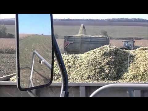 кукуруза 2014 в оао Леднево. Corn 2014 JSC Lednevo