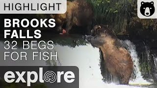 32 Begs 755 For Fish - Brooks Falls - Live Cam Highlight thumbnail