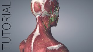 Getting Started with Essential Anatomy 5