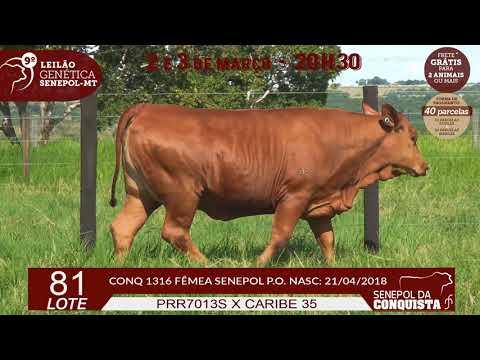 LOTE 81 CONQ 1316