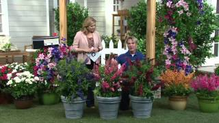 Cottage Farms 3-piece Garden Idols Butterfly Bush Collection on QVC