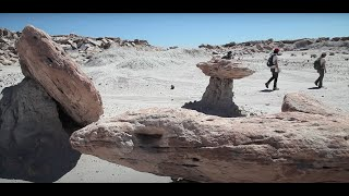 Dinosaurs in the Desert: Petrified Forest Wilderness