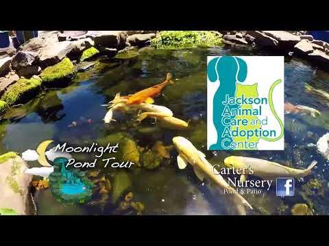 The Moonlight Pond Tour | Carter Nursery, Pond & Patio | Jackson, TN