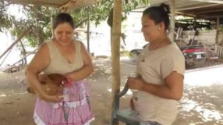 DESDE LA CASA DE TIA DORIS || COMO PREPARAR UNA GALLINA CRIOLLA  DE PRINCIPIPIO A FIN