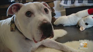 Local Vet Uses Stem Cells To Help Pets Peal