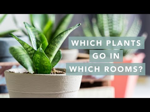 What plants to put in every room of your house