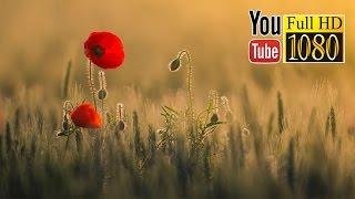 �������� ���� 3 часа  ✿ Дзен ✿ Красивая Музыка ✿ Дельта Ритм Тотальное Расслабление ������