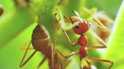 Clark's Termite and Pest Control | Ants | South Carolina