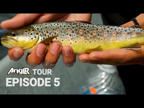 Fly Fishing For Big Brown Trout - South Holston River TN - Anglr Tour!