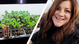 Touching Base & Checking on Seedlings! 🥰❤️ // Garden Answer