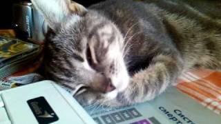 Кошка подергивается во сне