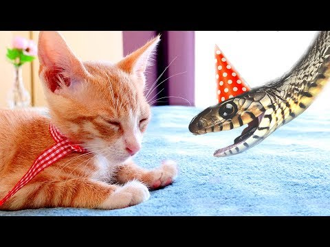 Cute Birthday Surprise: THE KITTEN!