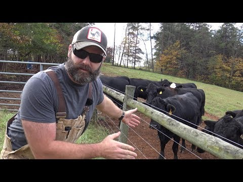 CATTLE FENCING IDEAS FOR YOUR FARM/RANCH