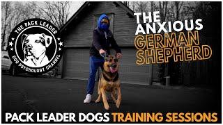 Pack Leader Dogs Training Session Noah The German Shepherd