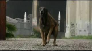 Нападение Собаки(, 2011-01-02T17:27:59.000Z)