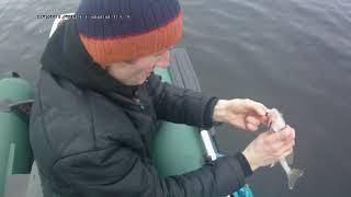 ловля судака на малька осенью с эхолотом