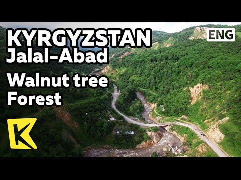 【K】Kyrgyzstan Travel-Jalal Abad[키르기스스탄 여행-잘랄아바드]세계 최대 야생 호두나무 숲/Walnut tree/Forest
