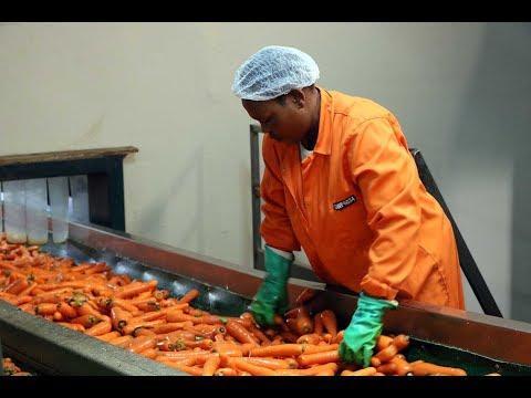 Afrique du Sud : Rugani, roi de la carotte