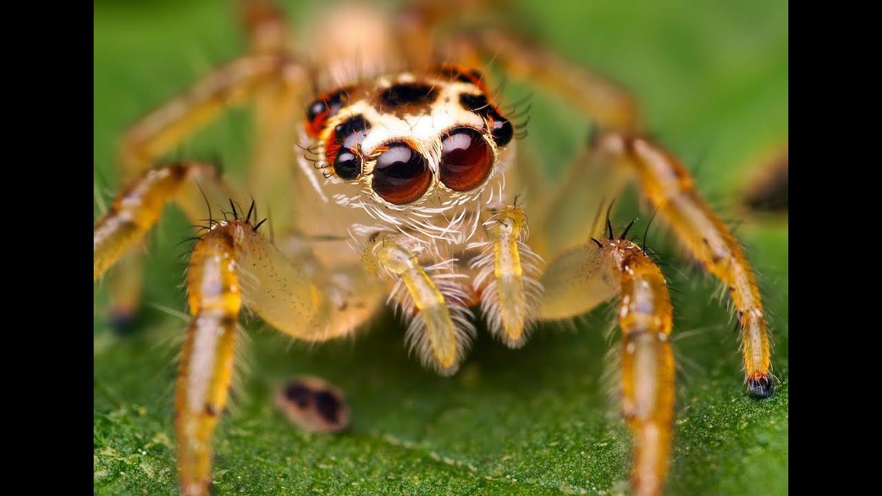 Interpretar sue os significado de so ar con ara as youtube - Insectos en casa fotos ...