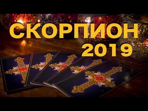 Гороскоп совместимости на 2019 год Скорпион