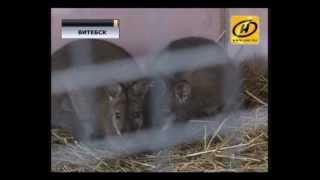 Пара кенгуру поселилась в зоопарке Витебска