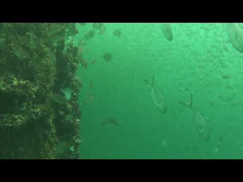 Fishes Around an Oil and Gas Platform