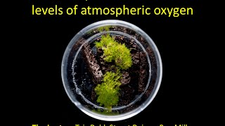 38NPS - Tim Lenton: Earliest land plants created modern levels of atmospheric oxygen