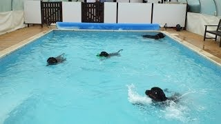 One For (omg)winnie Swimming Fans (rottweiler)