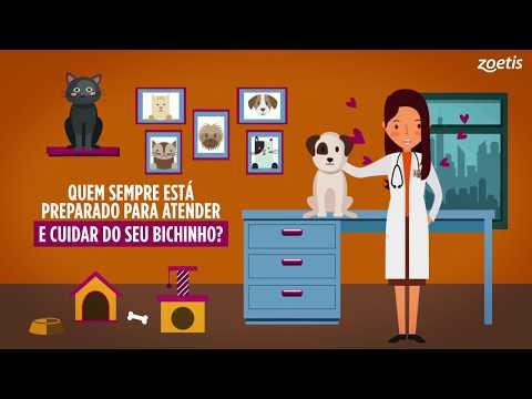 Zoetis Brasil - Animação 2D | Dia do Médico Veterinário
