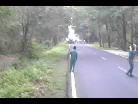 Elephants crossing the National Highway at Gorumara National Park  (Lataguri Forest )