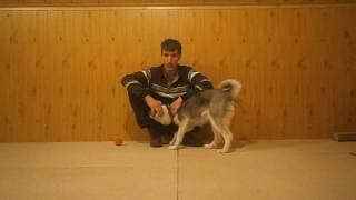 Как отучить щенка кусать руки
