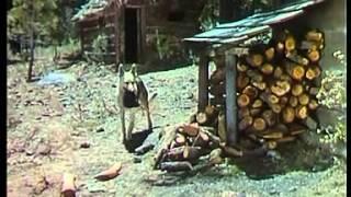 Überfall auf die Arctic Queen   Film 1938