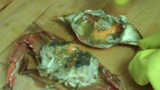 Coconut Curry Crab And Razor Clams Provençal, Part 2/3