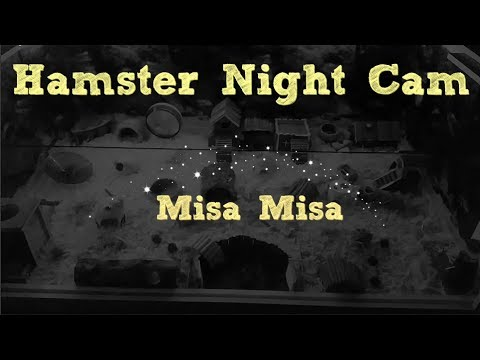 What my hamsters do at night !! ( Hamster Night Cam
