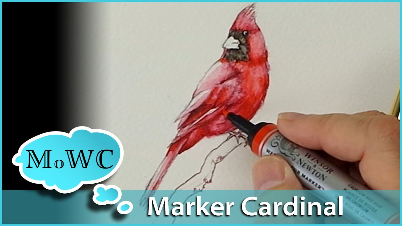How To Paint A Cardinal With Winsor Newton Watercolor