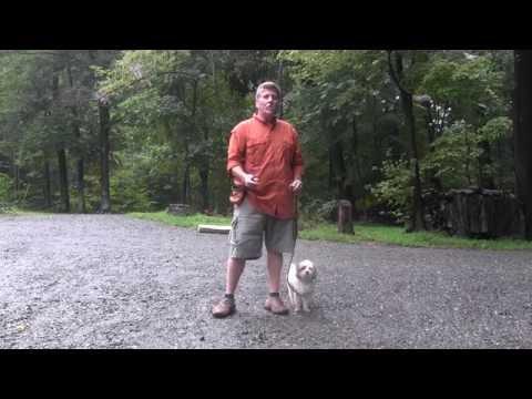Greensboro NC Dog Training - Maltipoo Dog Training - Spot