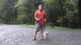 Greensboro Nc Dog Training - Maltipoo Dog Training - Spot