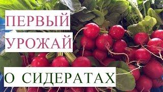 Первый Урожай в Теплице. Сидераты Весной в Теплице. (22.04.2017)
