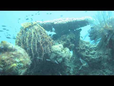 Malaysia Underwater (Pulau Perhentian Kechil)