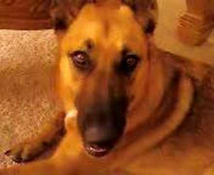 Bobble-head dog