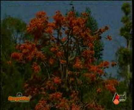 Bhavageethe -  shiva mandira  ಶಿವ ಮಂದಿರ ಸಮ ವನ ಸುಂದರ....